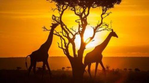 Кения от А до Я с полет София – Сафари и почивка на брега на океана